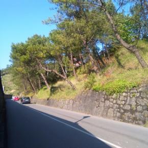 C´s advierte del peligro de los árboles situados en la ladera de la carretera que comunica Arnao con Salinas