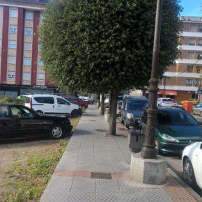 La Agrupación de Ciudadanos Siero reclama un cambio en el sistema de poda del arbolado del concejo