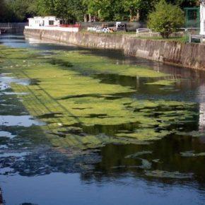 Ciudadanos denuncia que ninguna administración se quiere hacer cargo de la limpieza de los ríos en Gijón