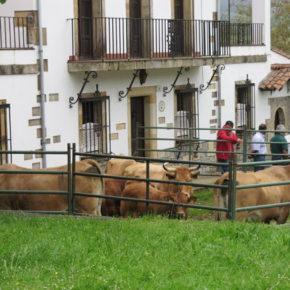 Ciudadanos Colunga pide que se recupere la Feria de Primavera y que seimpulsen los certámenes ganaderos en el concejo